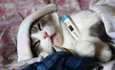 Как вовремя заметить простуду у домашнего питомца?!