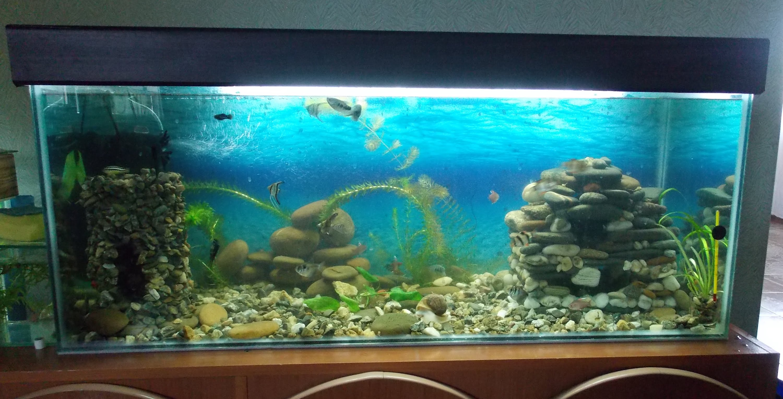 Как своими руками склеить аквариум своими руками фото 936