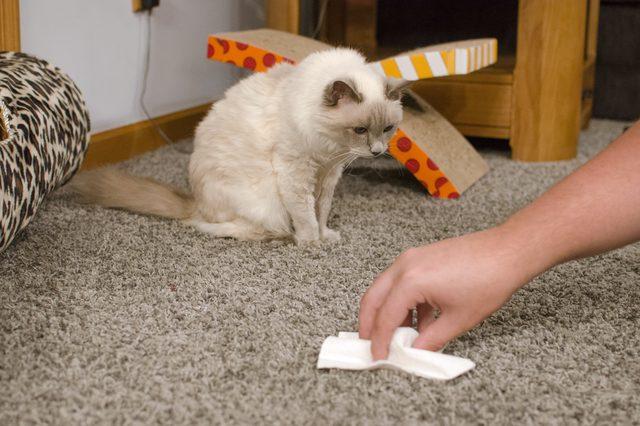Как удалить запах кошачьей мочи?