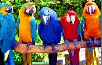 Насколько умны птицы?