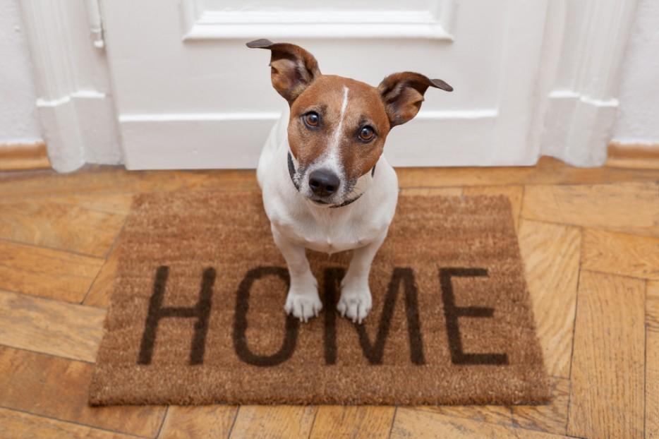 Какую собаку завести в квартире?