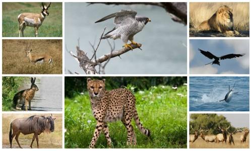 Самые быстрые животные планеты