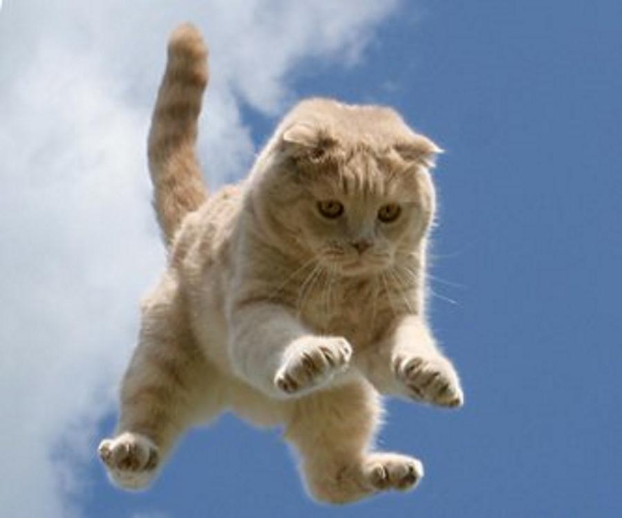 Всегда ли кошки приземляются на все четыре лапы?