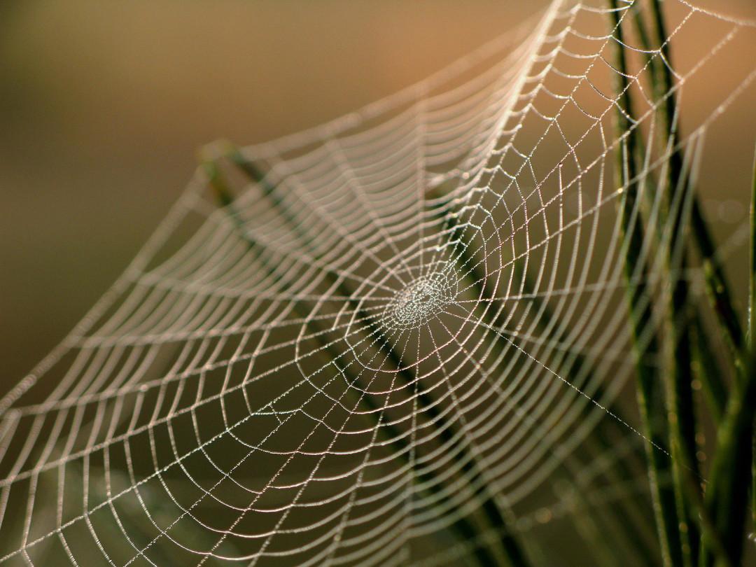 Какое значение в жизни пауков имеет паутина?