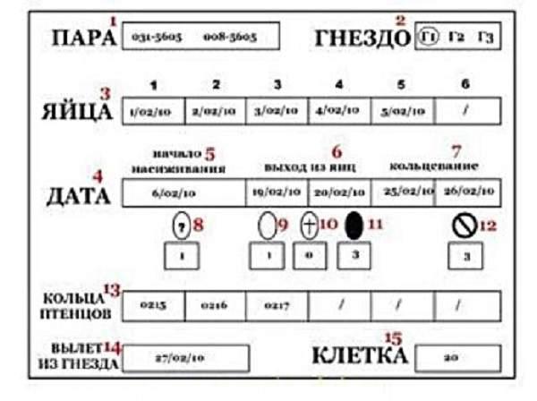 kak-razvodit-ptic-v-domashnih-uslovijah-animal-reader.-ru.