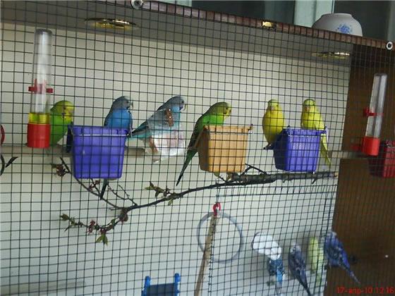 Как разводить птиц в домашних условиях