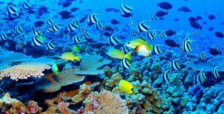 Оказалось, что рыбы способны запоминать человеческие лица
