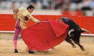 Действительно ли быки ненавидят красный цвет?